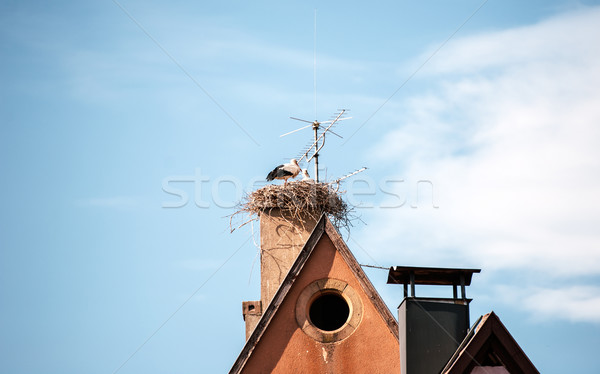 Stork ciconia ciconia nest on a house Stock photo © ifeelstock