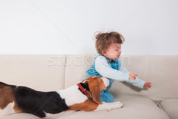 расстраивать ребенка мальчика ПЭТ 1 год плачу Сток-фото © igabriela
