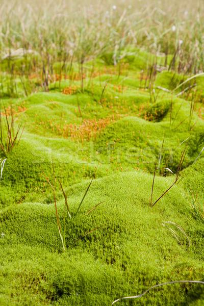 Vegetation in a bog Stock photo © igabriela