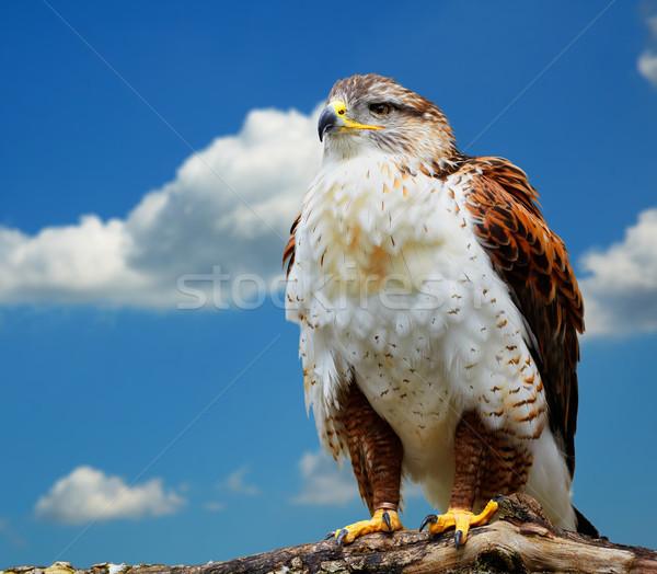 Blauwe hemel foto vogels buit centrum Stockfoto © igabriela