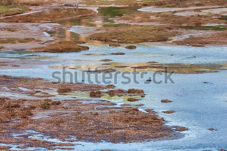 Geese in dirty water Stock photo © igabriela
