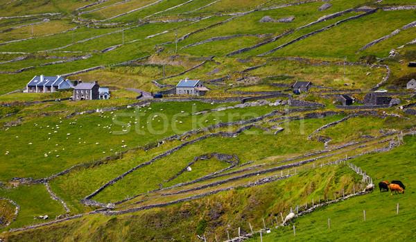 半島 細部 緑 アイルランド ストックフォト © igabriela
