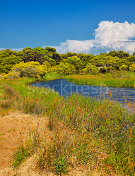 Kalogria forest and lagoon Stock photo © igabriela