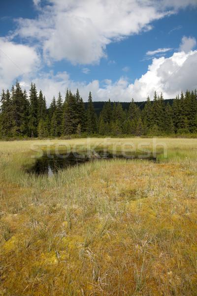 Beautiful bog in Romania Stock photo © igabriela