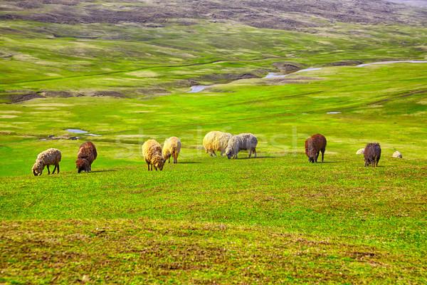 Sereg birka mező vidék tavasz fű Stock fotó © igabriela