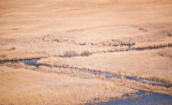 озеро высокий мнение Дунай дельта Румыния Сток-фото © igabriela