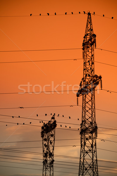 Unusual cormorant colony Stock photo © igabriela