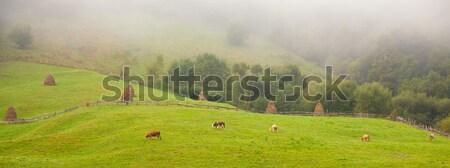 Apuseni countryside Stock photo © igabriela