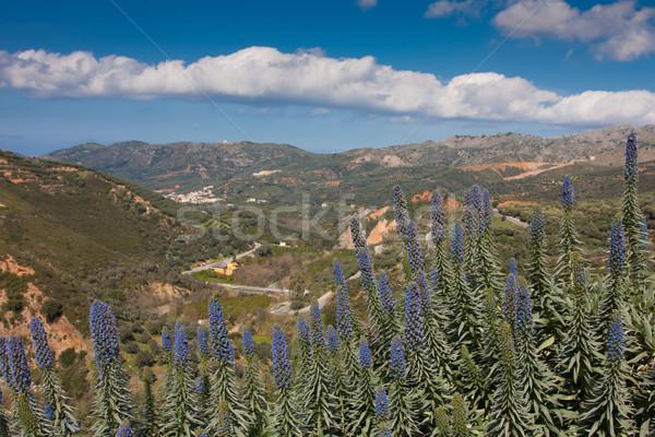 Giardino botanico panorama natura montagna verde impianto Foto d'archivio © igabriela
