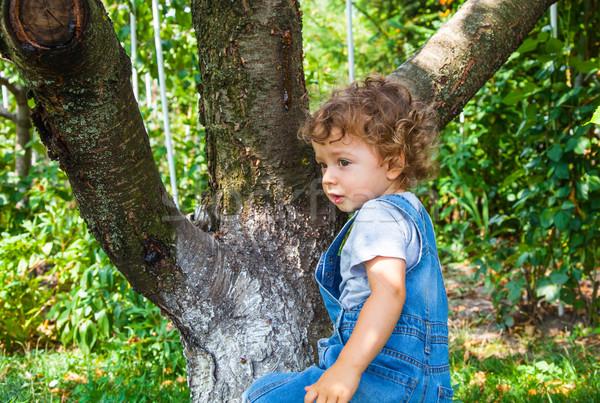 1 год ребенка мальчика портрет подняться Вишневое Сток-фото © igabriela
