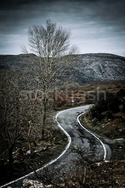 Road in the countryside Stock photo © igabriela