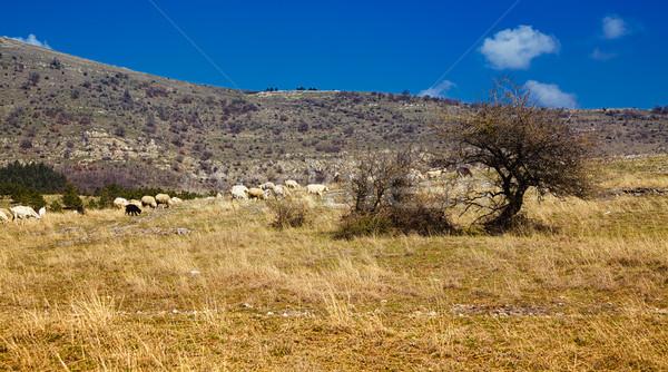 Sereg birka mező vidék passz Romania Stock fotó © igabriela