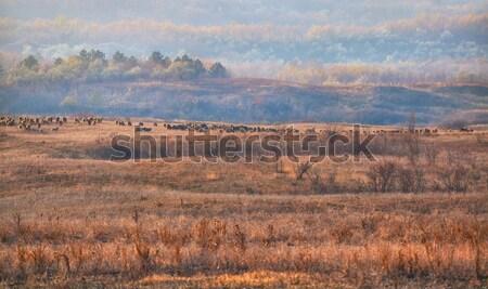 Sereg birka kecskék domb falu fák Stock fotó © igabriela