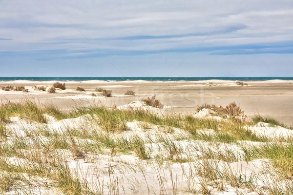 Sand dunes Stock photo © igabriela