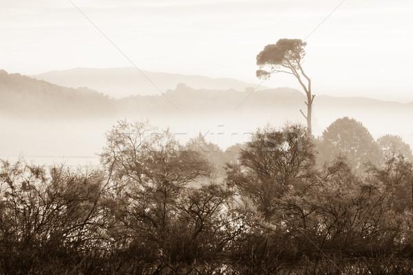 лес Восход Греция дерево солнце природы Сток-фото © igabriela