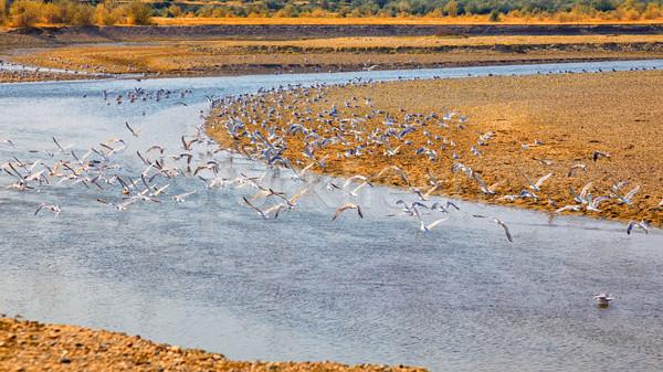 Meeuwen rivieroever zomertijd Roemenië landschap schoonheid Stockfoto © igabriela