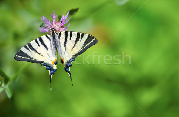 бабочка сидят цветок лет природы цвета Сток-фото © igabriela