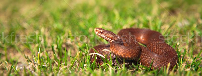 Panoramique vue européenne nature serpent animaux Photo stock © igabriela