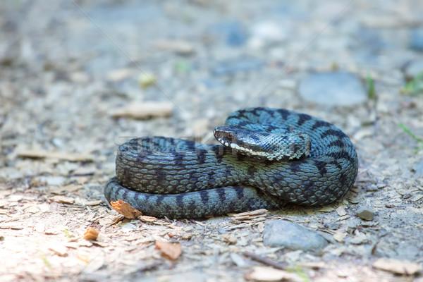 Européenne nature été serpent animaux Photo stock © igabriela