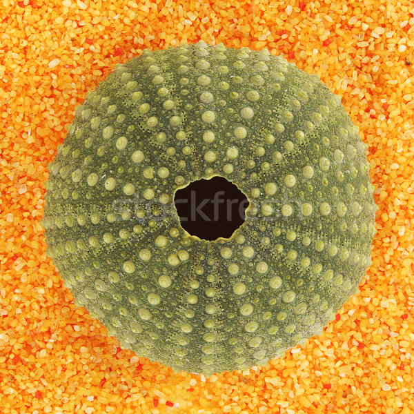 Stock photo: Sea urchin shell