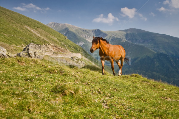 Horse in the mountains Stock photo © igabriela