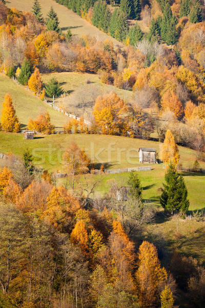Otono colores hermosa paisaje Rumania Foto stock © igabriela