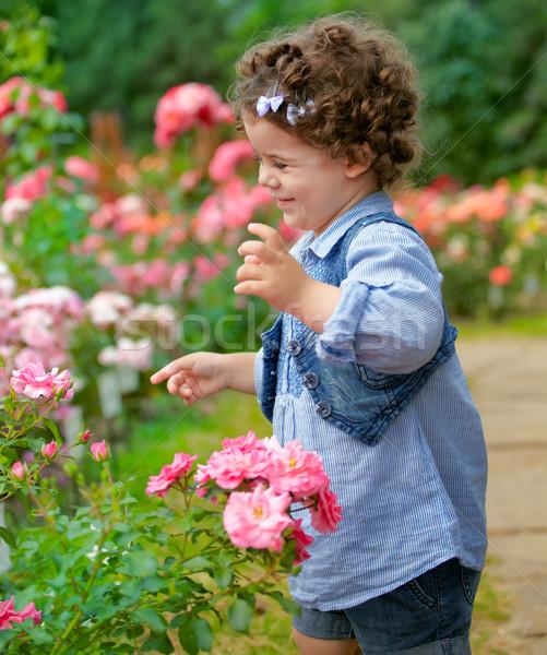 Kislány rózsa kert portré boldog kétéves Stock fotó © igabriela