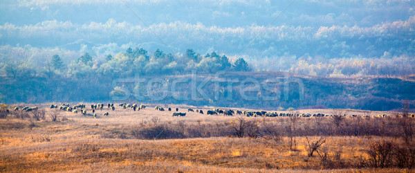 Schapen geiten heuvel dorp bomen Stockfoto © igabriela