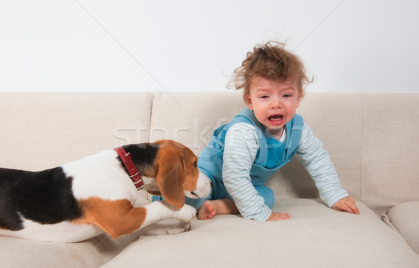 Upset baby boy and his pet Stock photo © igabriela