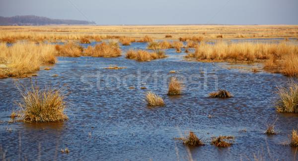 Tó Duna delta tartalék tavasz falu Stock fotó © igabriela