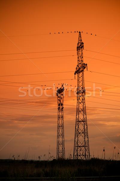 необычный колония электроэнергии пейзаж птица силуэта Сток-фото © igabriela
