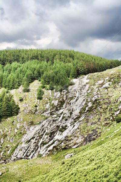 ストックフォト: 滝 · 山 · アイルランド · 夏 · 草 · 森林