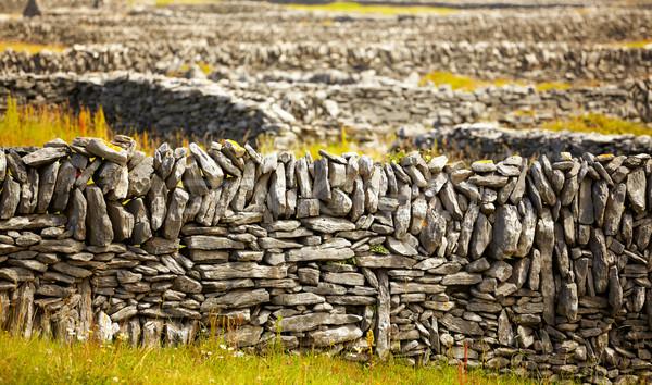Irish fences Stock photo © igabriela