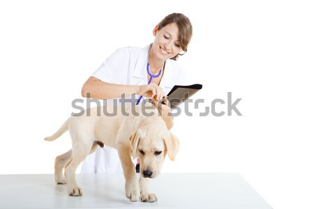 Stock photo: Veterinay taking care of a dog