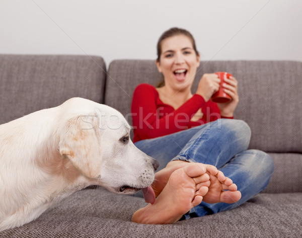 Dog licking the toes Stock photo © iko