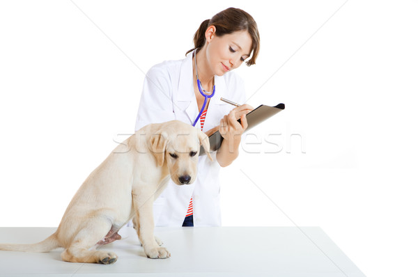 Veterinay taking care of a dog Stock photo © iko