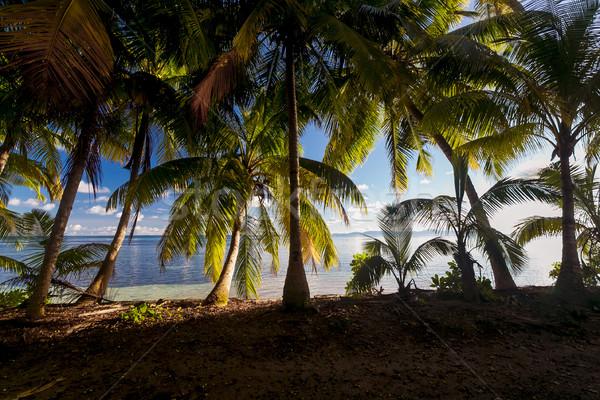 Tropikal plaj güzel görmek plaj güneş doğa Stok fotoğraf © iko