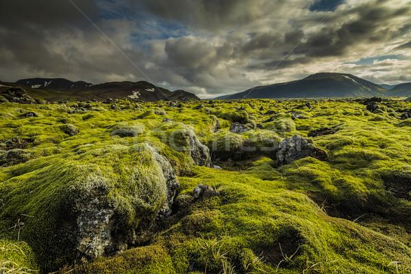 Moha borító vulkáni kövek textúra fű Stock fotó © iko