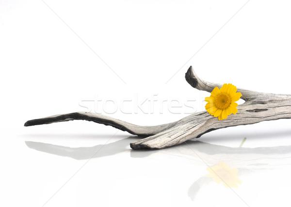 Stock foto: Holz · Stück · gelbe · Blume · Blume · Blatt · Schönheit