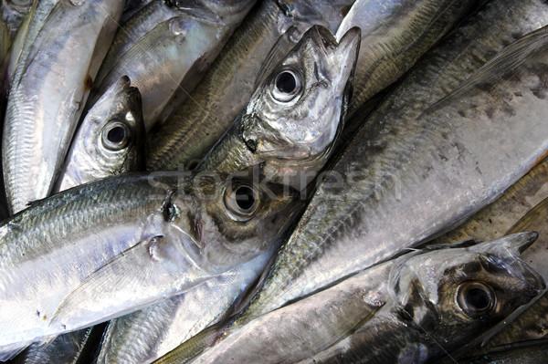 Seafood Stock photo © iko