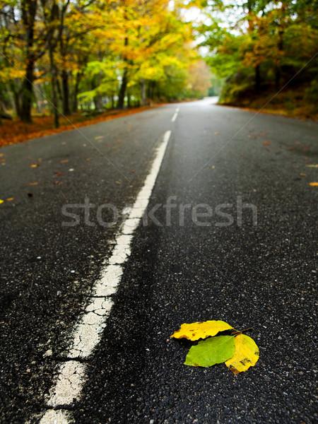 道路 美しい 秋 草 自然 ストックフォト © iko