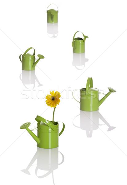 Locsol többszörös mélységélesség első egy virágok Stock fotó © iko