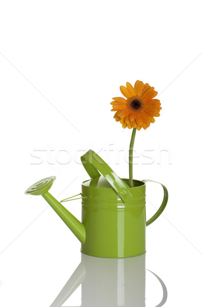 Green watering can with a flower Stock photo © iko