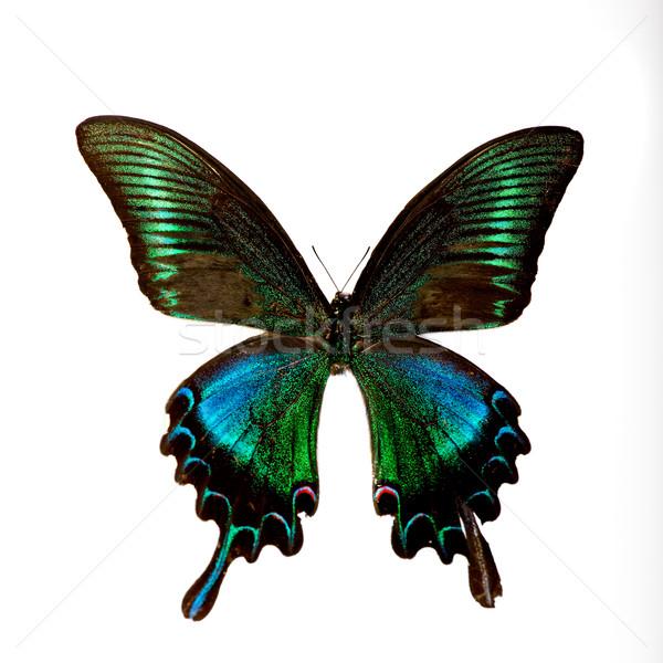 Pillangó gyönyörű színes példány izolált fehér Stock fotó © iko