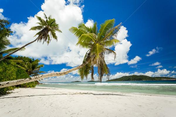 красивой пляж Сейшельские острова мнение тропический пляж Сток-фото © iko