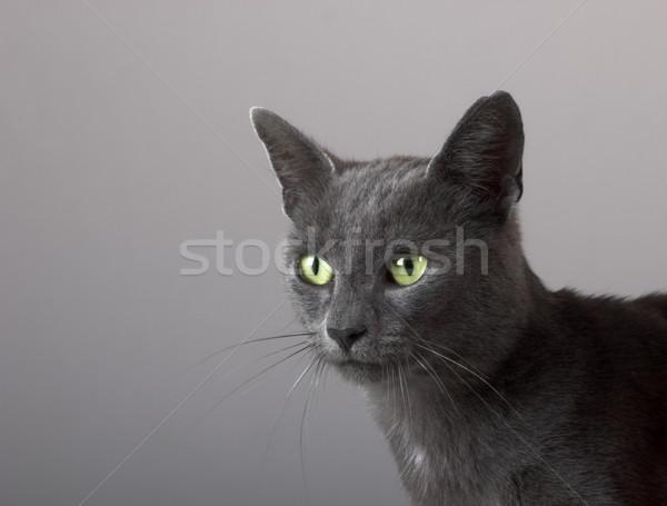 Gri kedi yavrusu güzel yeşil gözleri gözler Stok fotoğraf © iko
