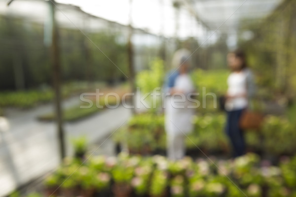 Dzień szklarnia widoku kwiaciarz klienta działalności Zdjęcia stock © iko