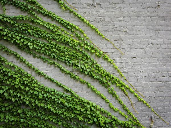 ツタ 工場 レンガの壁 デザイン 葉 背景 ストックフォト © iko