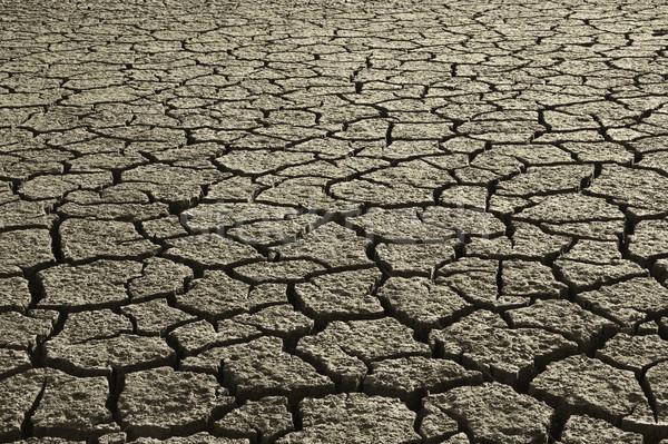 Dry Mud Field Stock photo © iko
