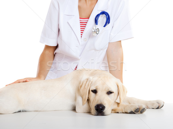 Foto d'archivio: Care · cane · giovani · femminile · veterinaria